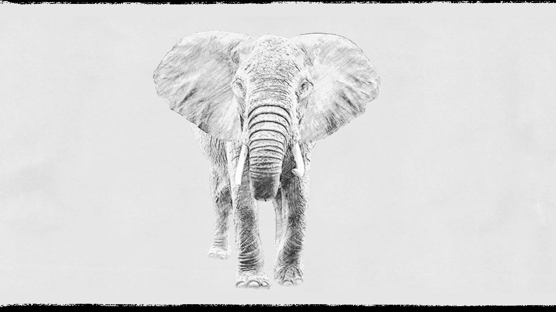 02_Elefant