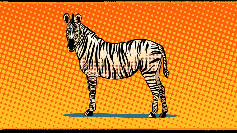 02_zebra