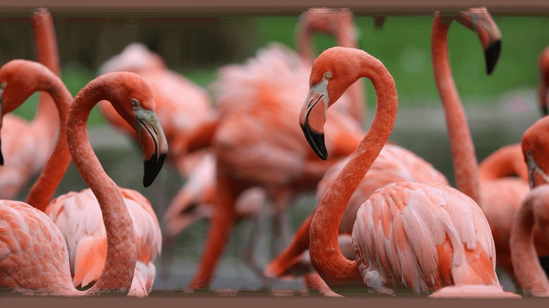 03_Flamingo