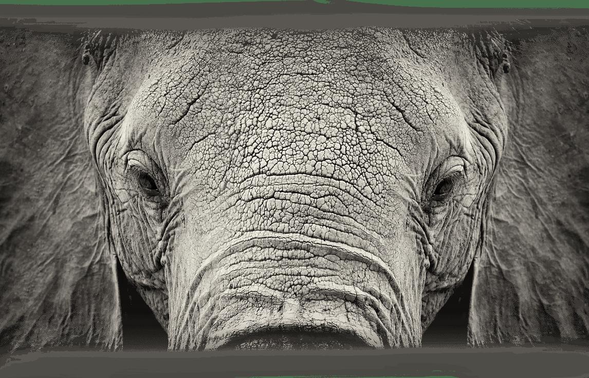 05_Elefant