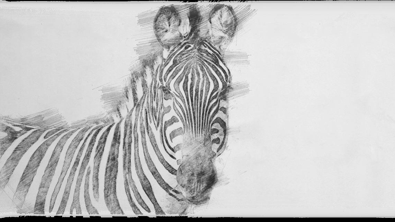 05_Zebra