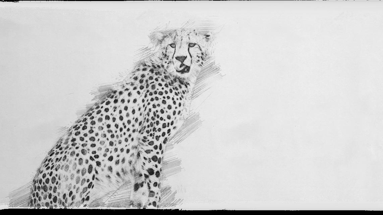 06_Gepard