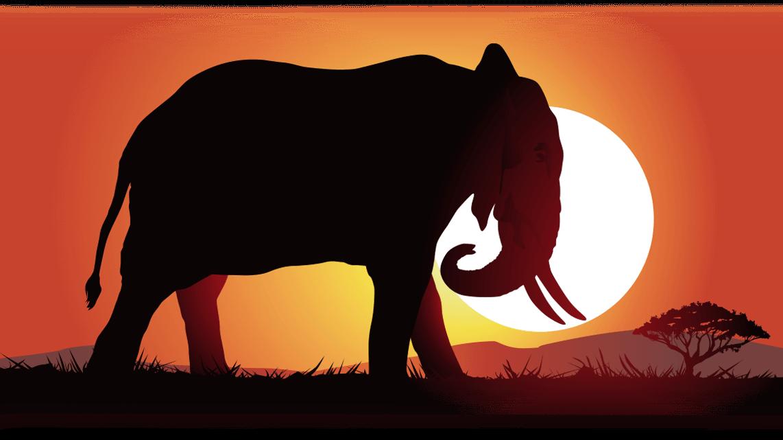 07_Elefant