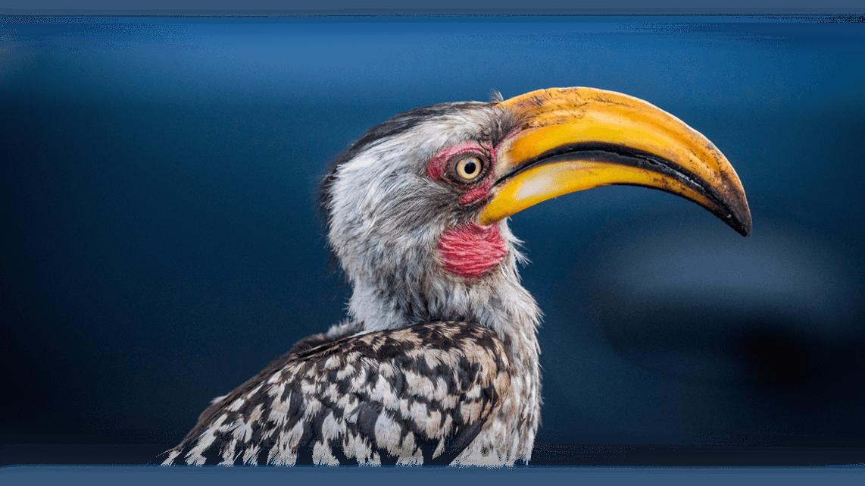 08_buntervogel
