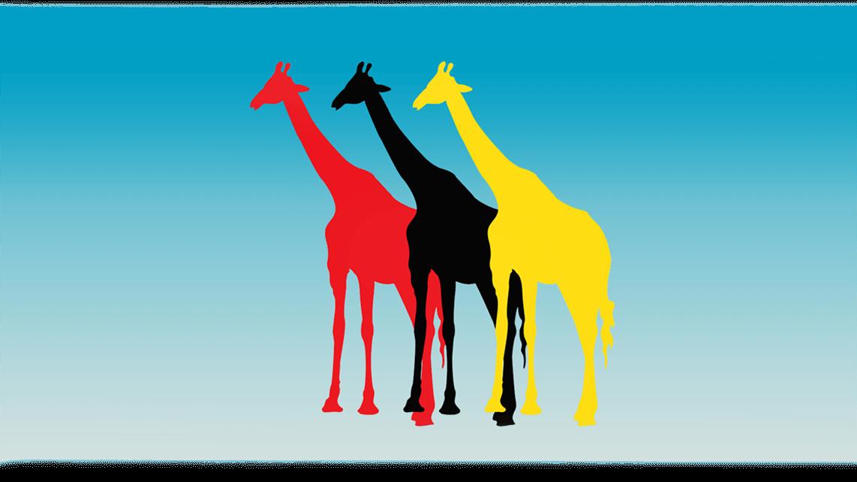 10_giraffen