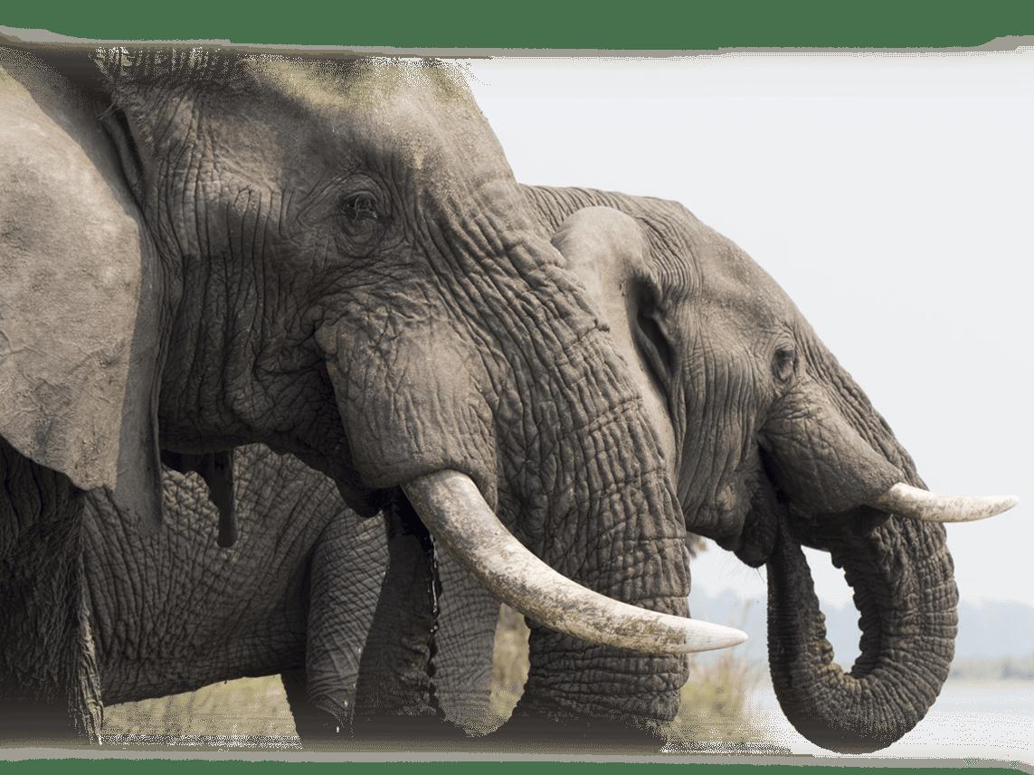 26_elefanten