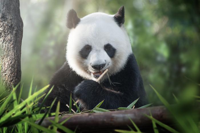 Alles was Sie zum Google update Panda wissen müssen