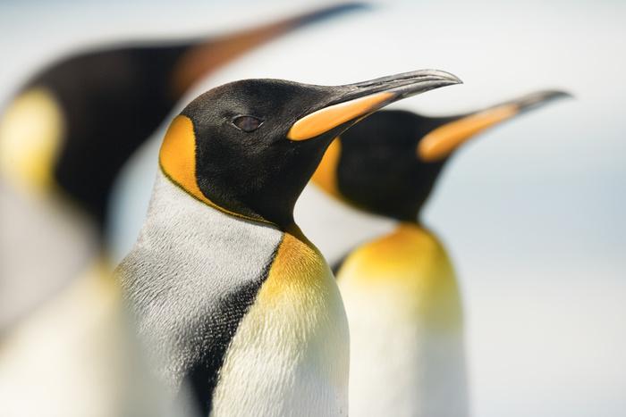 Erfahren Sie alles über das Google Penguin Update